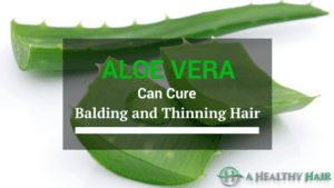 aloe vera can cure balding