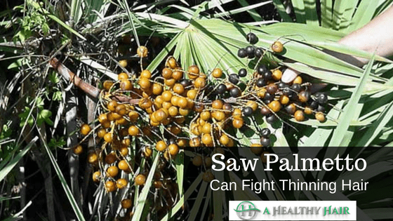 Saw Palmetto for hair loss and baldness